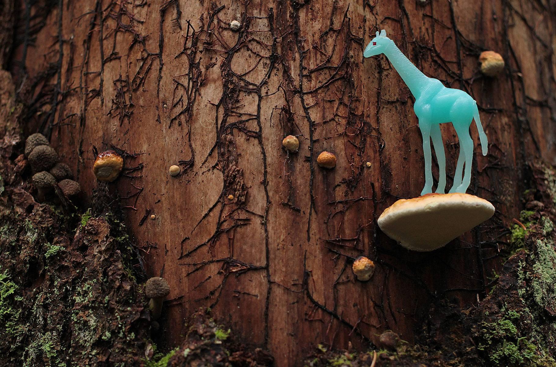 sininen kirahvi käävän päällä